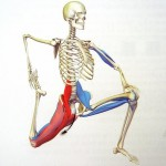 Mobility and Flexibility Programming for Athletes