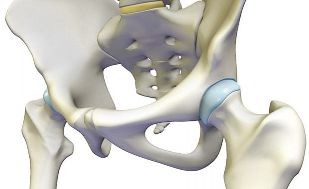Functional Anatomy Of The Hip Complex For Sports